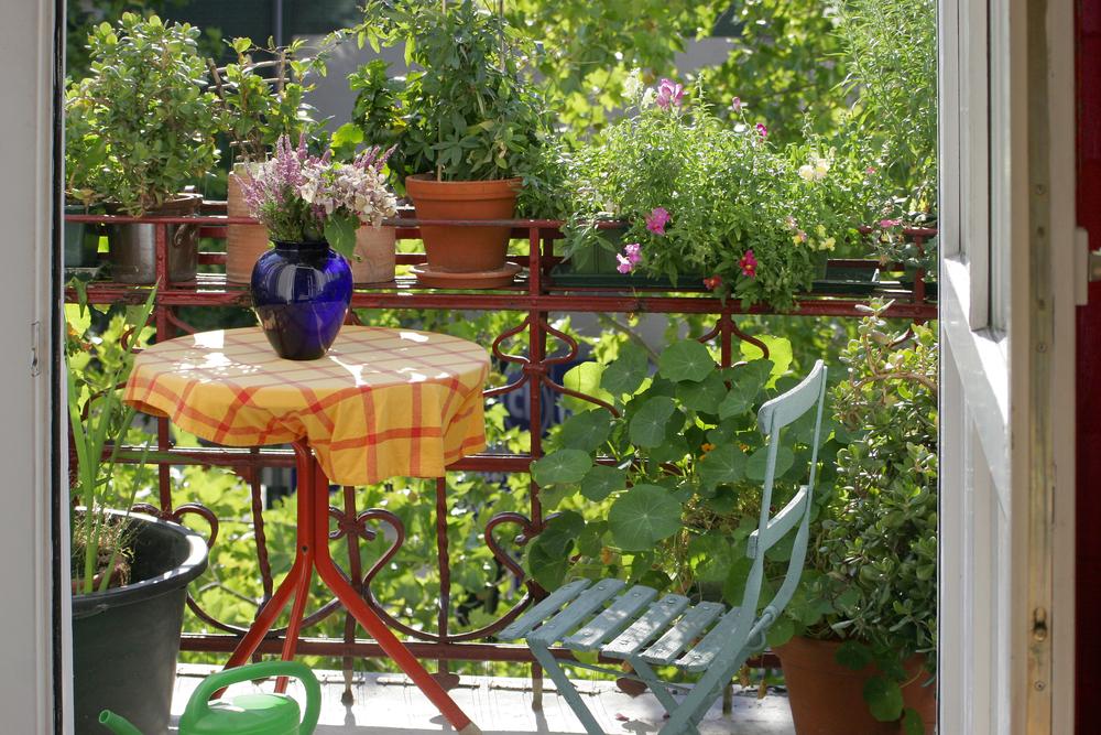 Советы по озеленению балкона