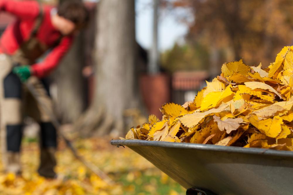 Пять важных дел на даче осенью