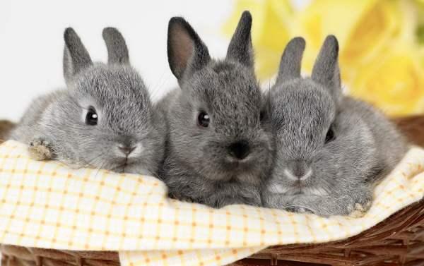 Особенности национального кролиководства. Первичный рынок.