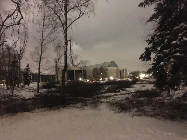 На ВДНХ за ночь вырубили целый сквер