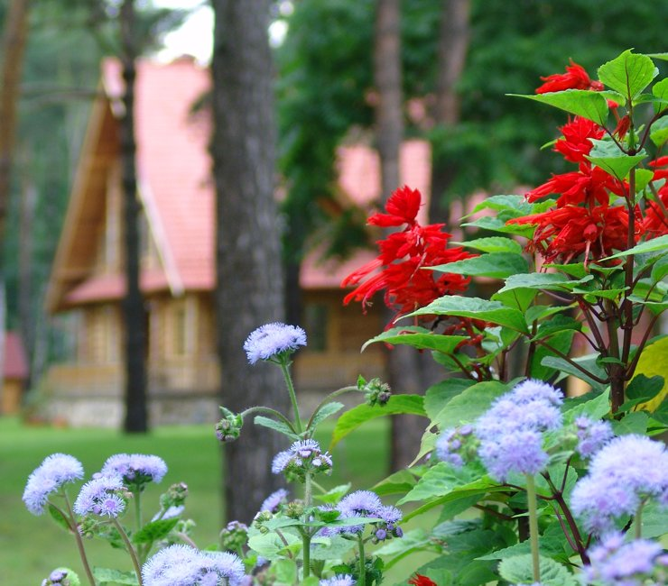 Регистрируем дом в садовых и дачных товариществах