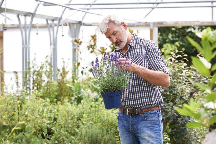 Сад на даче. Как выбирать растения, чтобы не пожалеть