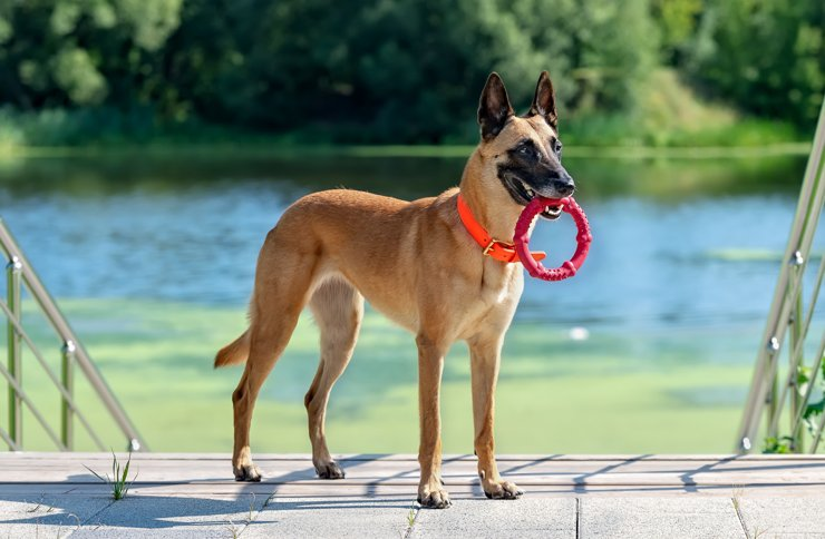 Собачья жизнь. Выбираем дом для семьи и питомцев