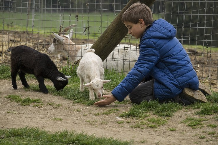 Коттеджные поселки: в загородном мире животных
