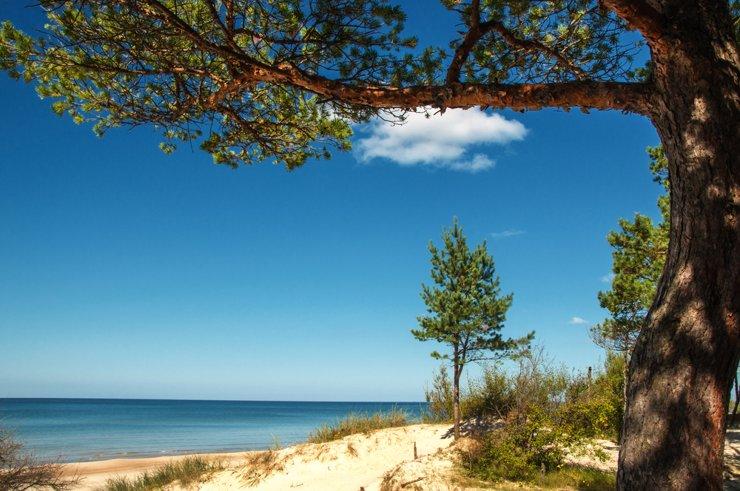 Сосны, песок и Финский залив: пять коттеджных поселков Курортного района Петербурга