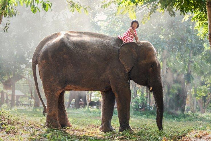 «Без детей и животных»