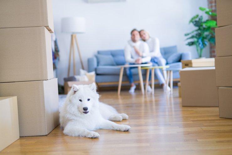 Завоюют ли популярность квартиры с мебелью от застройщика?