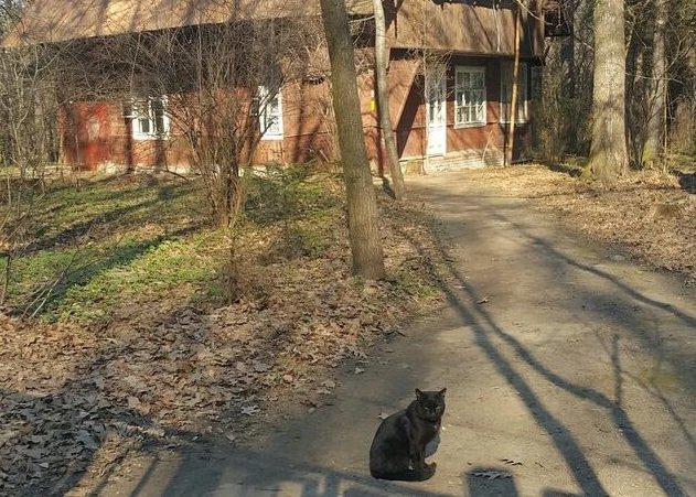 Осколки деревенской Москвы: частные дома в черте города