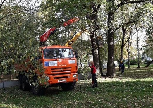 Жители улицы Ивана Франко пытаются защитить парк с вековыми дубами