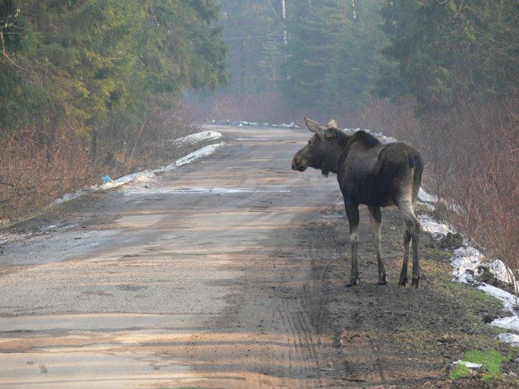 Депутаты одобрили законопроект, позволяющий сокращать территории национальных парков