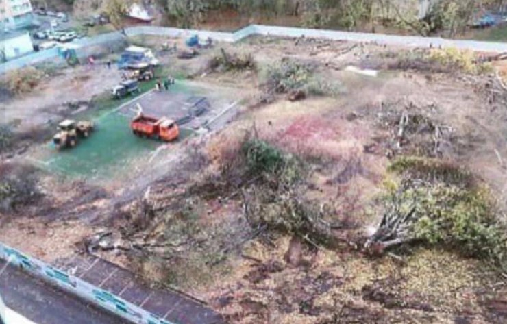 В одном из дворов района Черемушки ради стройки по реновации за 4 часа вырубили все деревья