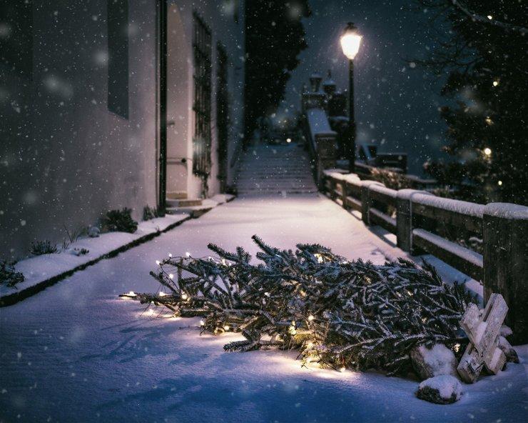 Чиновники готовятся к Новому году и… похищают елки