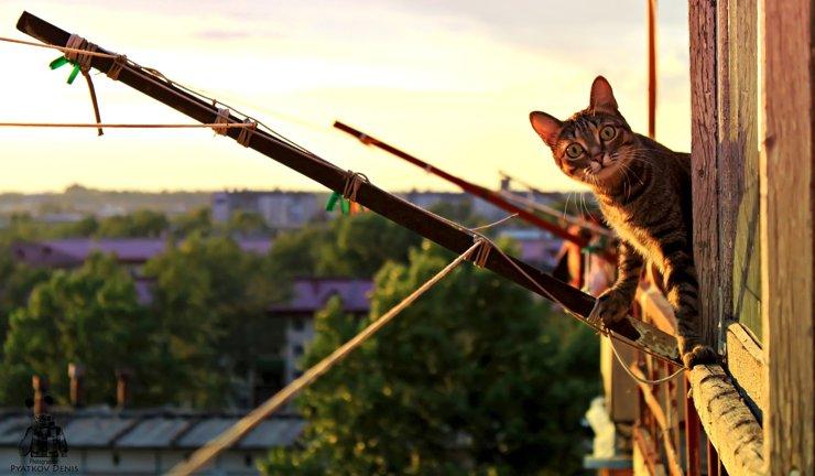 Чиновники вывели формулу расчета допустимого количества котов в квартире