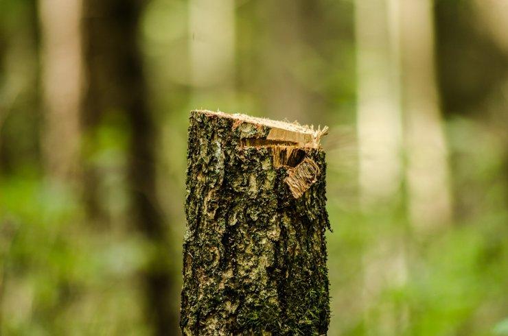 Москва за три года потеряла 200 тысяч деревьев