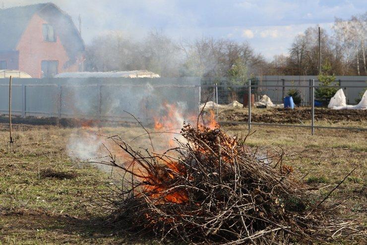 Штрафы для дачника: можно ли пилить деревья, жечь листву и собирать дрова?