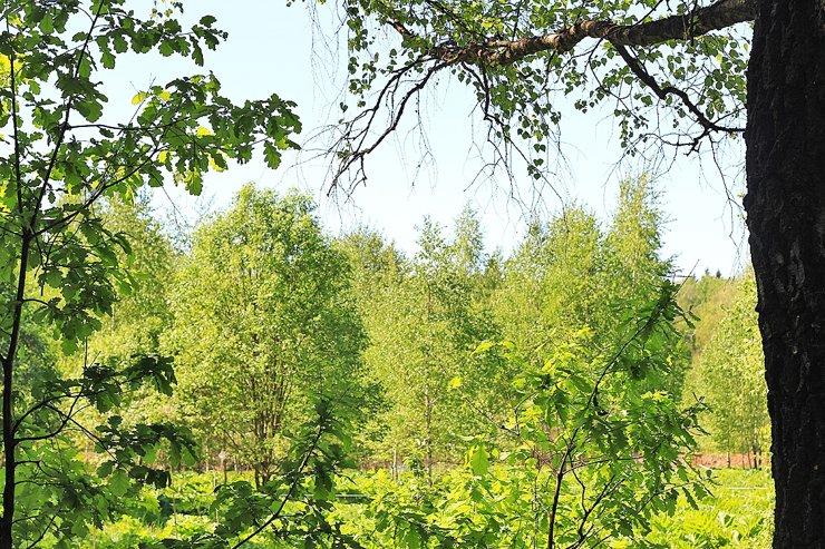 Жители Подмосковья предложили сделать свободными от застройки 1800 зеленых зон