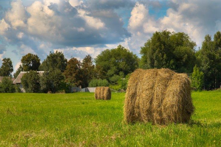 На сельхозземлях разрешили строить дом. Но только фермерам