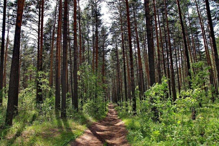 В Новосибирске выделили 57 гектаров под развитие декоративного питомника