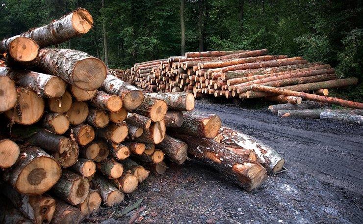 IKEA уличили в продаже товаров из незаконно добытой в Сибири древесины