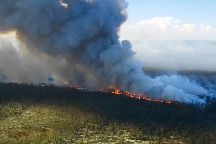 Россия в огне: можно ли защитить свой дом от лесных пожаров?