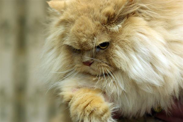 Котик на миллион