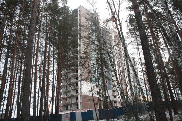 Деревья подступают вплотную к стройке. Убирать их застройщик не планирует