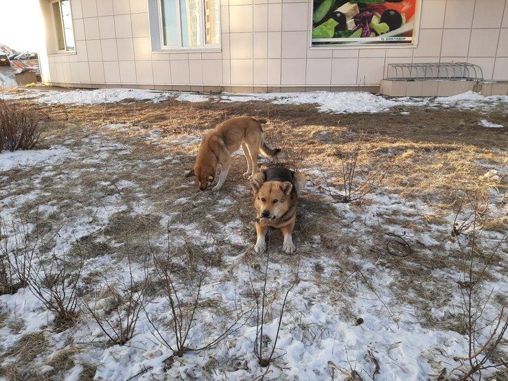 Однако больше беспокойства местным причиняют бродячие собаки. Они тут повсюду: в свое время вокруг развернулось много строек, куда они сбежались из Николаевки. Стройки кончились— дворняги остались