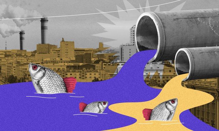 200 тысяч в обмен на рыбью жизнь