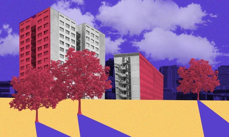 Деревья в городе: как и для чего озеленяют общественные пространства